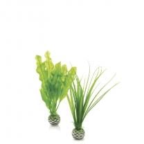 biOrb rostliny malé zelené