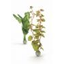 biOrb rostliny střední zelené