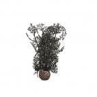 biOrb dekorační korály černé malé